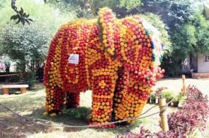 elephant capsicum
