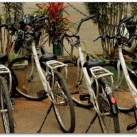 Cycling, Free Art, Cubbon Park