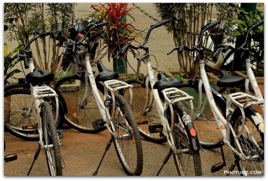 Cycles Cubbon Park