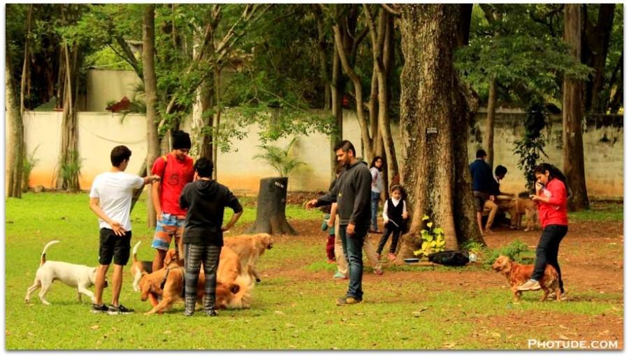Dog Show Cubbon Park