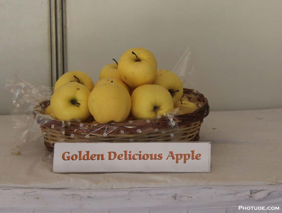 Golden Delicisous Apple