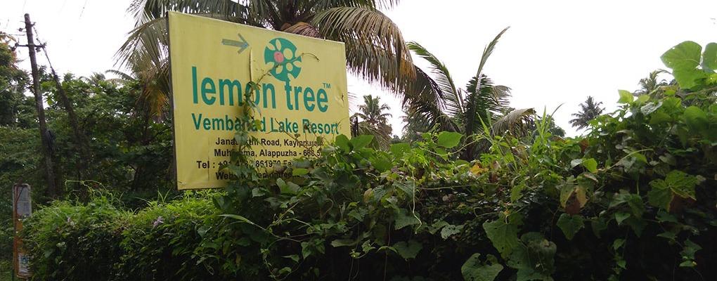 Lemon Tree - Signage