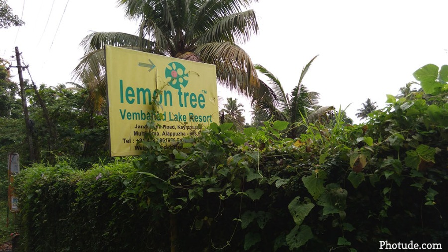 Lemon Tree - Signage